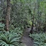 Kepler Track, NZ