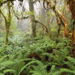 Ferns and moss in beech forest