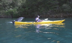 Kayaker and dolphin Sea Kayak Adventures
