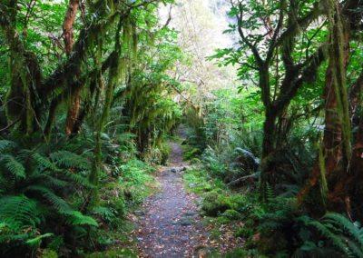 Milford Track Hiking Trail