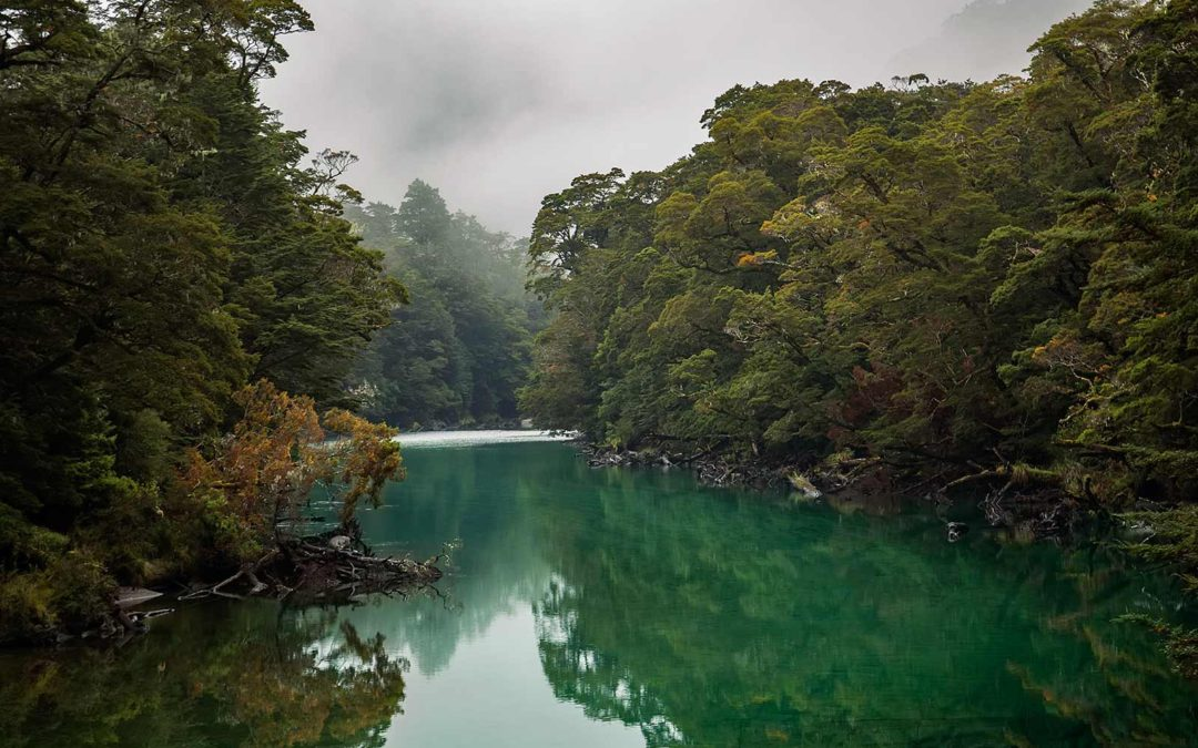 Milford Track Booking