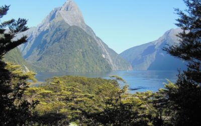Milford Track Diary – One Tramper's Experience of the Milford Track