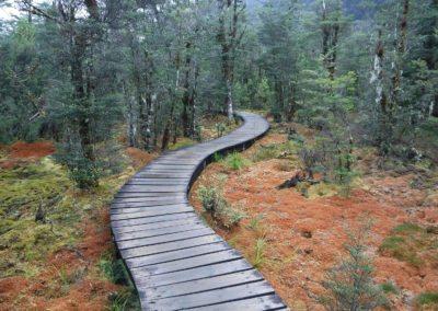 Boardwalk through swamp lands